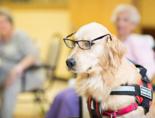 Seniors With Pets: Why They Keep The Doctor Away